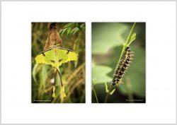 Vlinder-3
